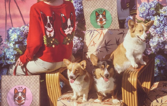 Gucci celebra l'anno cinese del cane