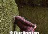 Oberalp diventa distributore per FALKE e Burlington
